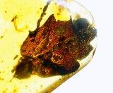 ミャンマー産植物入り琥珀(葉)バーマイト23